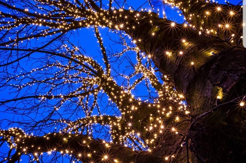 Подсветка деревьев 3