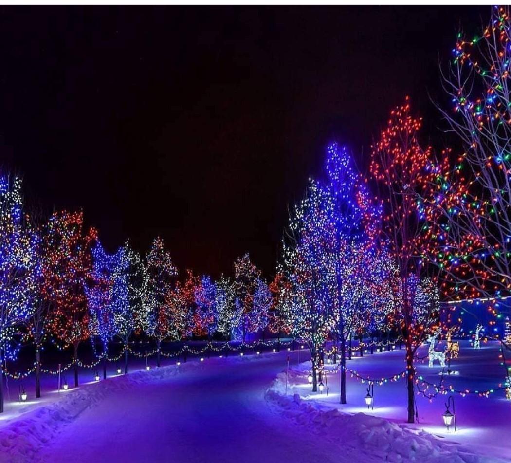 Подсветка деревьев 5